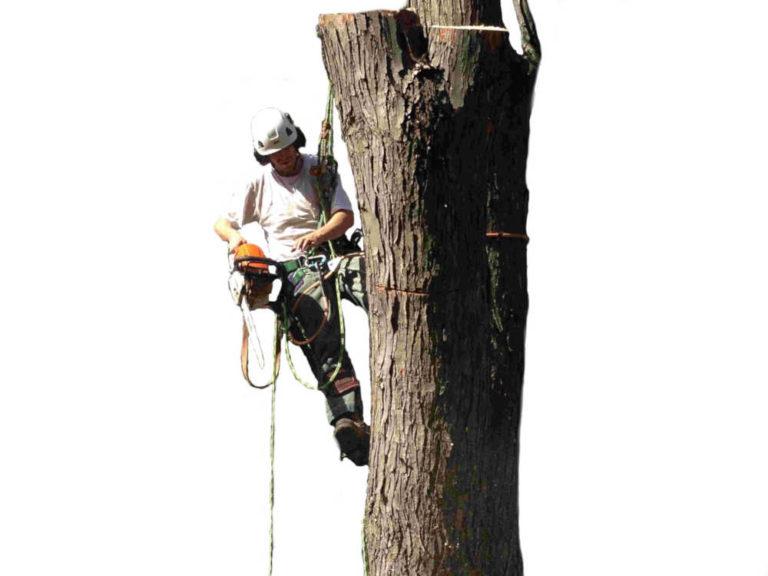 Toronto Tree Services