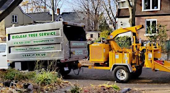 BigLeaf Tree Service leaf it to us