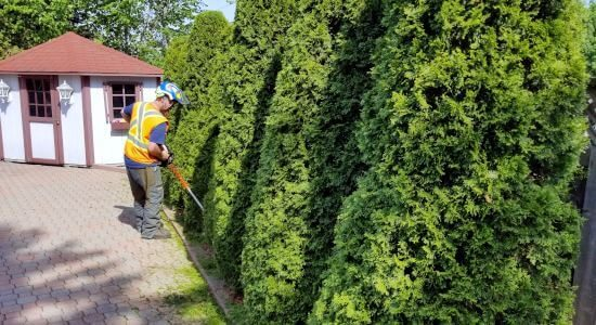 Toronto Cedar Fedge Trimming