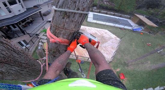 Toronto Oak Tree Removal